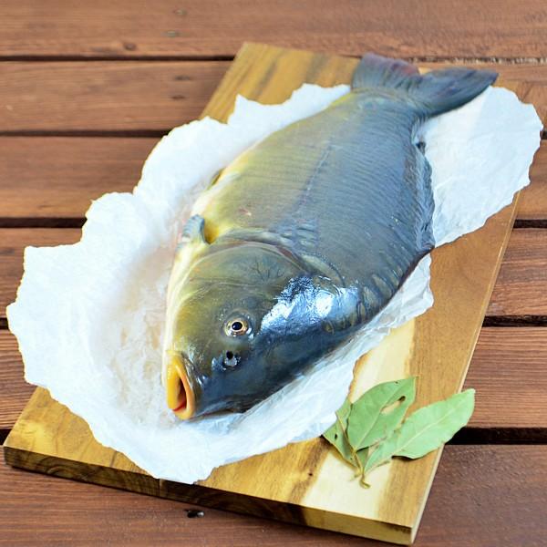 Karpfen - ganzer Fisch - fangfrisch
