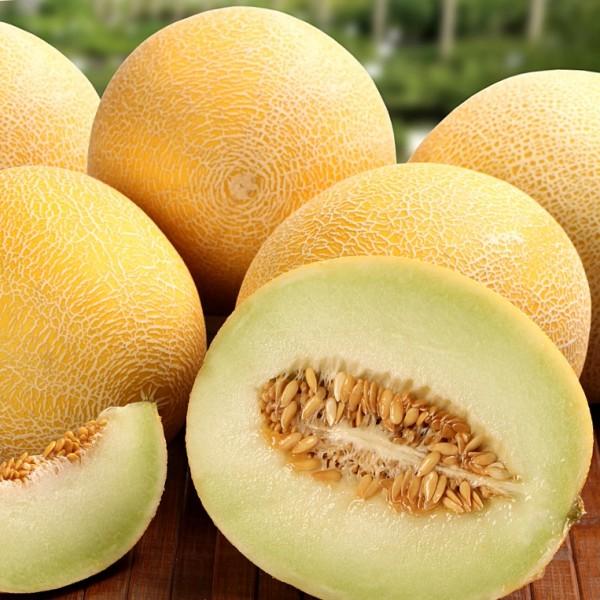 BIO - Honigmelone