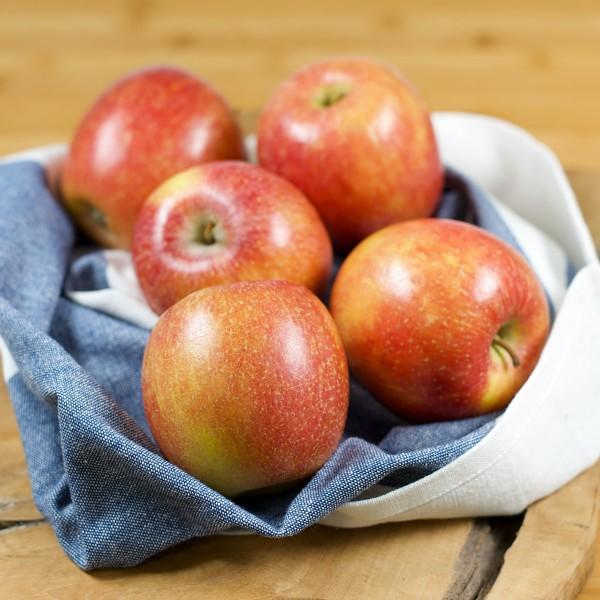 regionale Äpfel der Saison