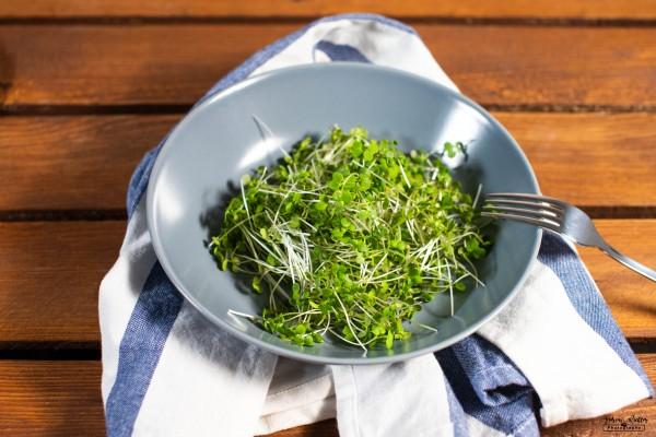 Microgreen Senf 50g