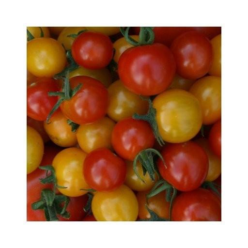 BIO - Bunte Cherry Strauchtomaten 100 g
